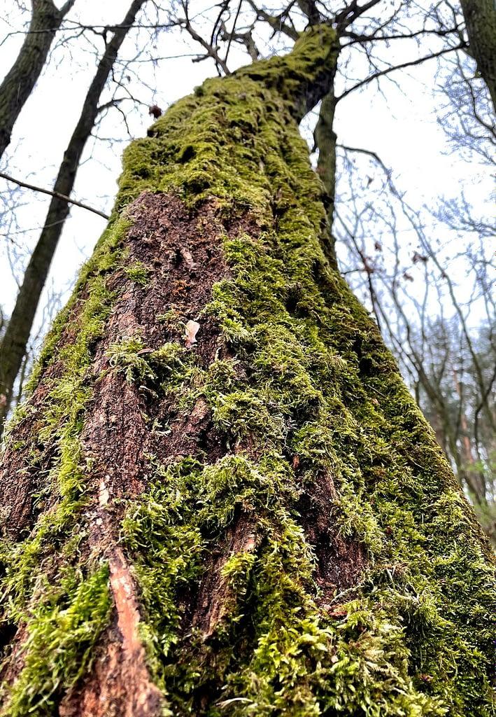 Dobříňský háj, Procházka v dešti lesem není nuda, padlý strom porostlý mechem