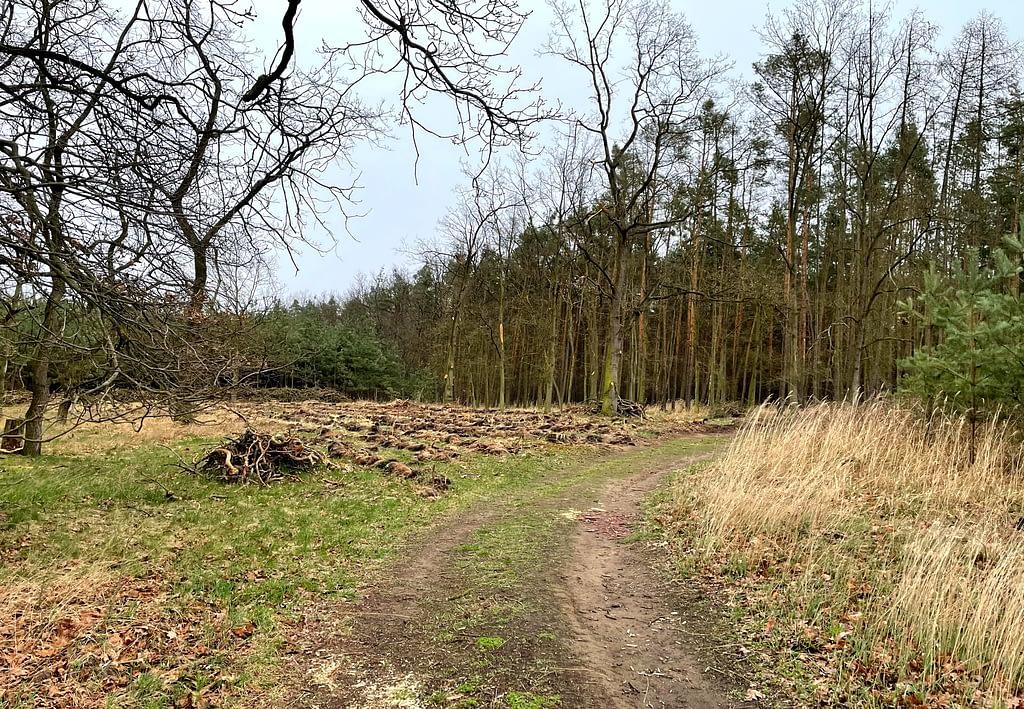 mítina, les, dřevo