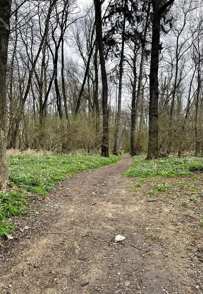 Dobříňský háj, Procházka v dešti lesem není nuda, cesta lesem