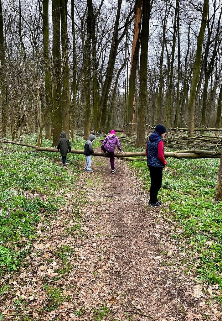Dobříňský háj, Procházka v dešti lesem není nuda, děti přelézají padlý strom
