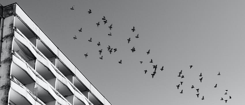 hejno ptáků přilétá do města