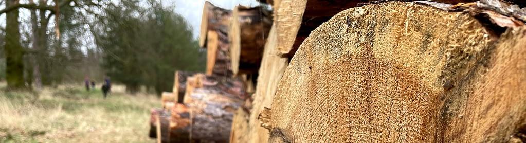 Pokácené dřevo, Procházka v dešti lesem není nuda