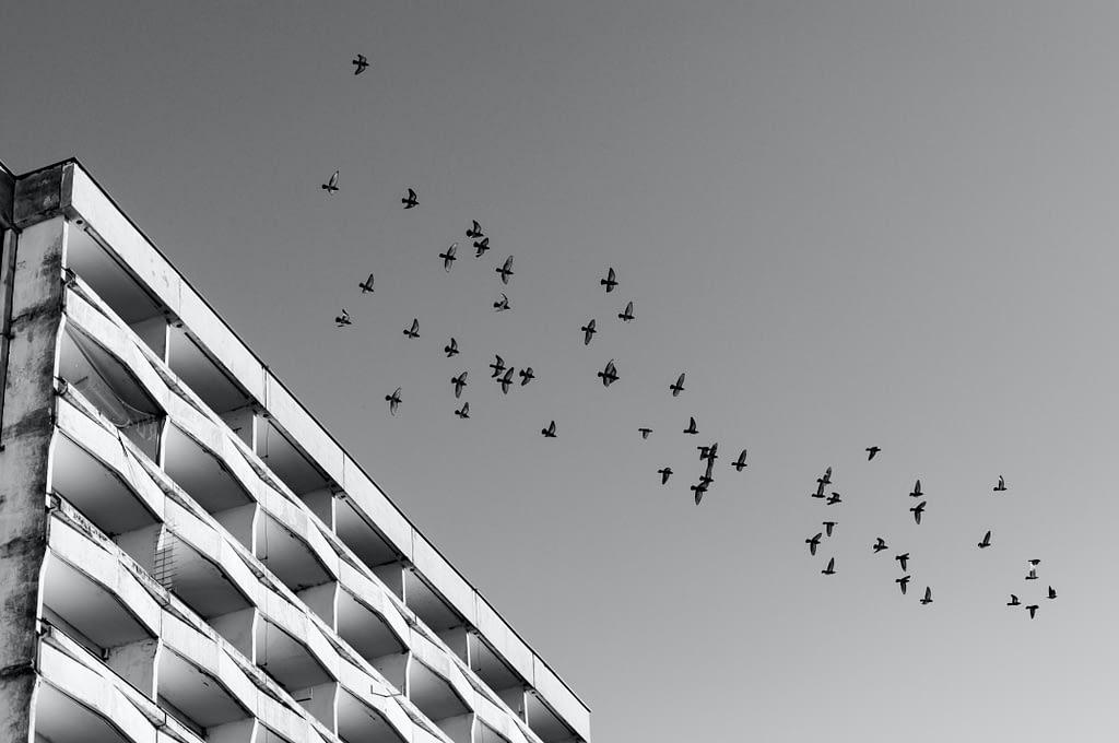 ptáci přilétající do města