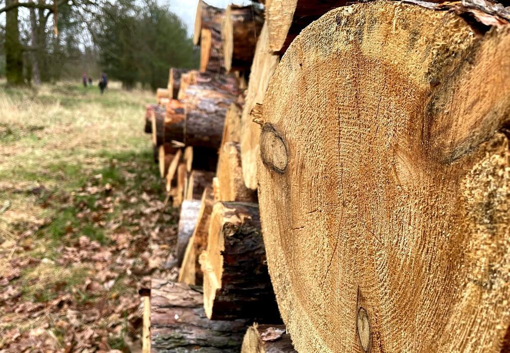 dřevo v lese